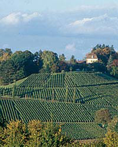 Zürich Wine Region