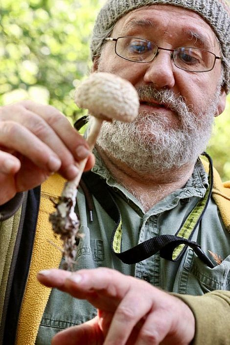 Wild mushroom foraging in the Pacific Northwest
